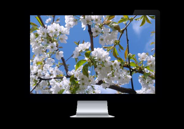 medio-ambiente-pantalla